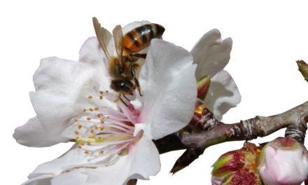 """""""Wer Bienen retten will, sollte Bio Produkte kaufen"""""""