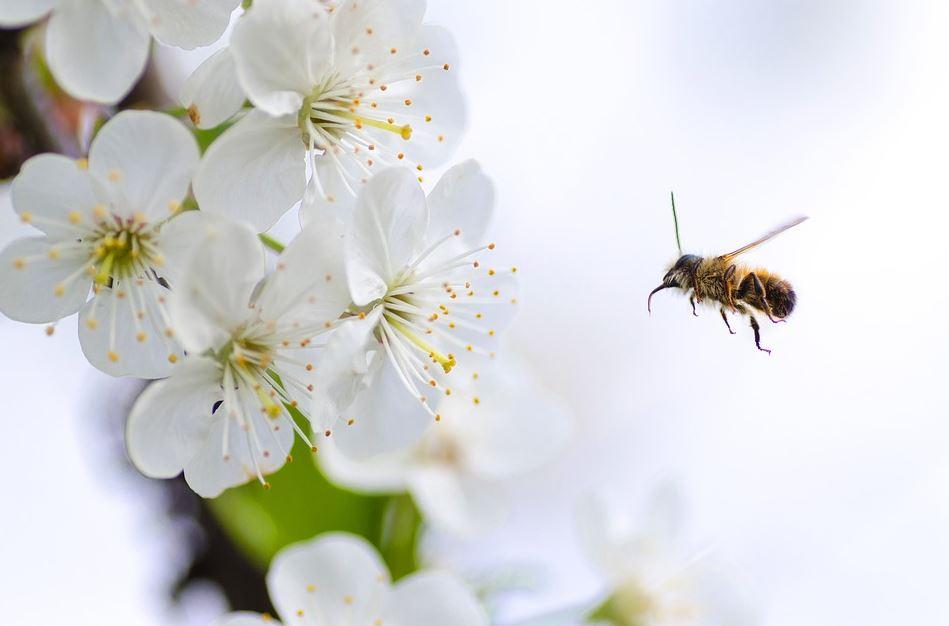 Bio-Bienen für Dich - Miete pro Saison - Bio-Imkerei