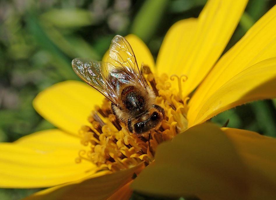 Mieten Sie sich einen Bienenstock!