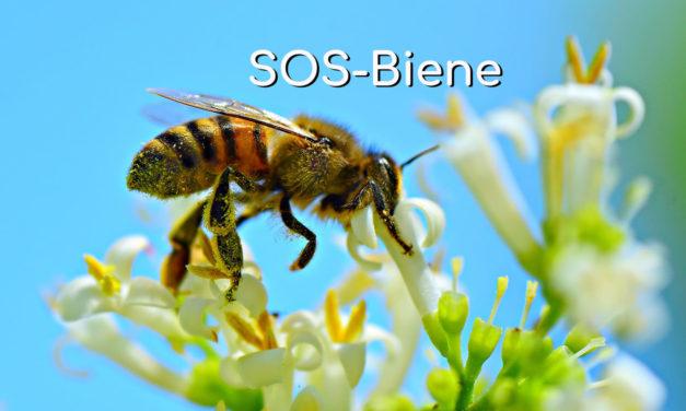 SOS Biene – Rettet die Bienen vor dem Bienensterben