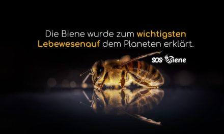 Die Biene wurde zum wichtigsten Lebewesen auf dem Planeten erklärt.