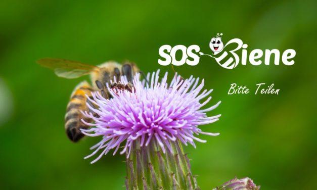Frankreich ist das erste Land in Europa, das alle Pestizide verbietet, die Bienen töten