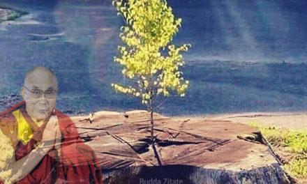 Spruch des Tages: Ganz gleich was in deinem Leben passiert ist …
