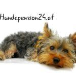 Hundepension 24 Stunden in Kärnten – Gut untergebracht in Klagenfurt am Wörthersee
